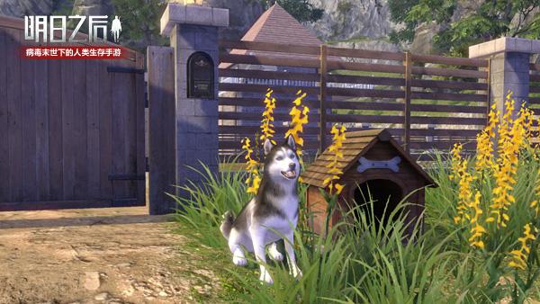 当哈士奇遇上末世,《明日之后》全新狗子登场!