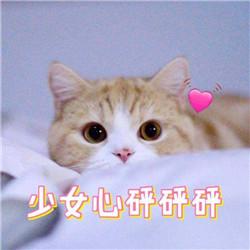 橘猫在线求领养 《西蒙的猫跑酷》乖萌预约中